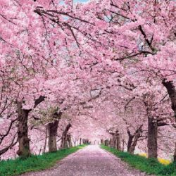 IKIGAI – Filosofia japonesa para uma Vida Plena e Feliz